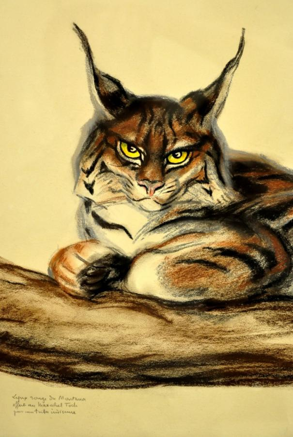 André Margat Drawing Pastel Lynx Red Du Montana Art Deco 1929 , More Informations...